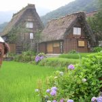 Bearsac in foreground of rice fields and grass roofed houses.