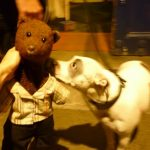 Dog meets teddy bear