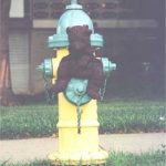 Bearsac sitting on a water hydrant.